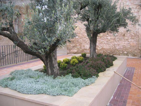 jardin olivo juan vilar consultor estrategico