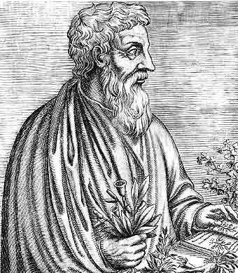 Dioscórides ya informaba de los grandes beneficios de los aceites tempranos en el siglo I a C