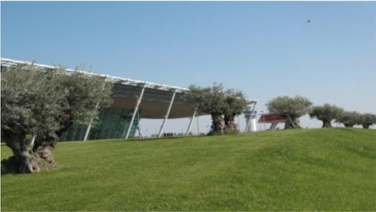 CENTENNIAL OLIVES PROTECT THE TIRANA AIRPORT